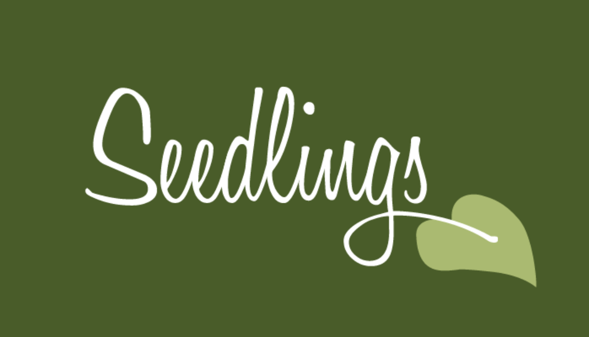 seedlings-web-feature-01